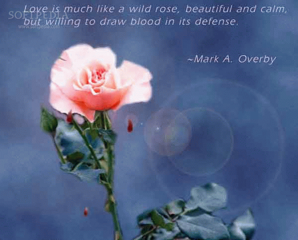 Fabulous Love Quotes and Sayings 600 x 483 · 117 kB · png